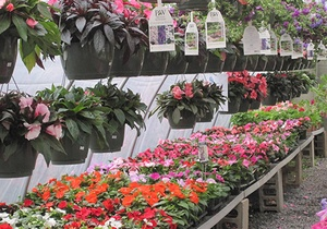 Selection of Proven Winners flowers