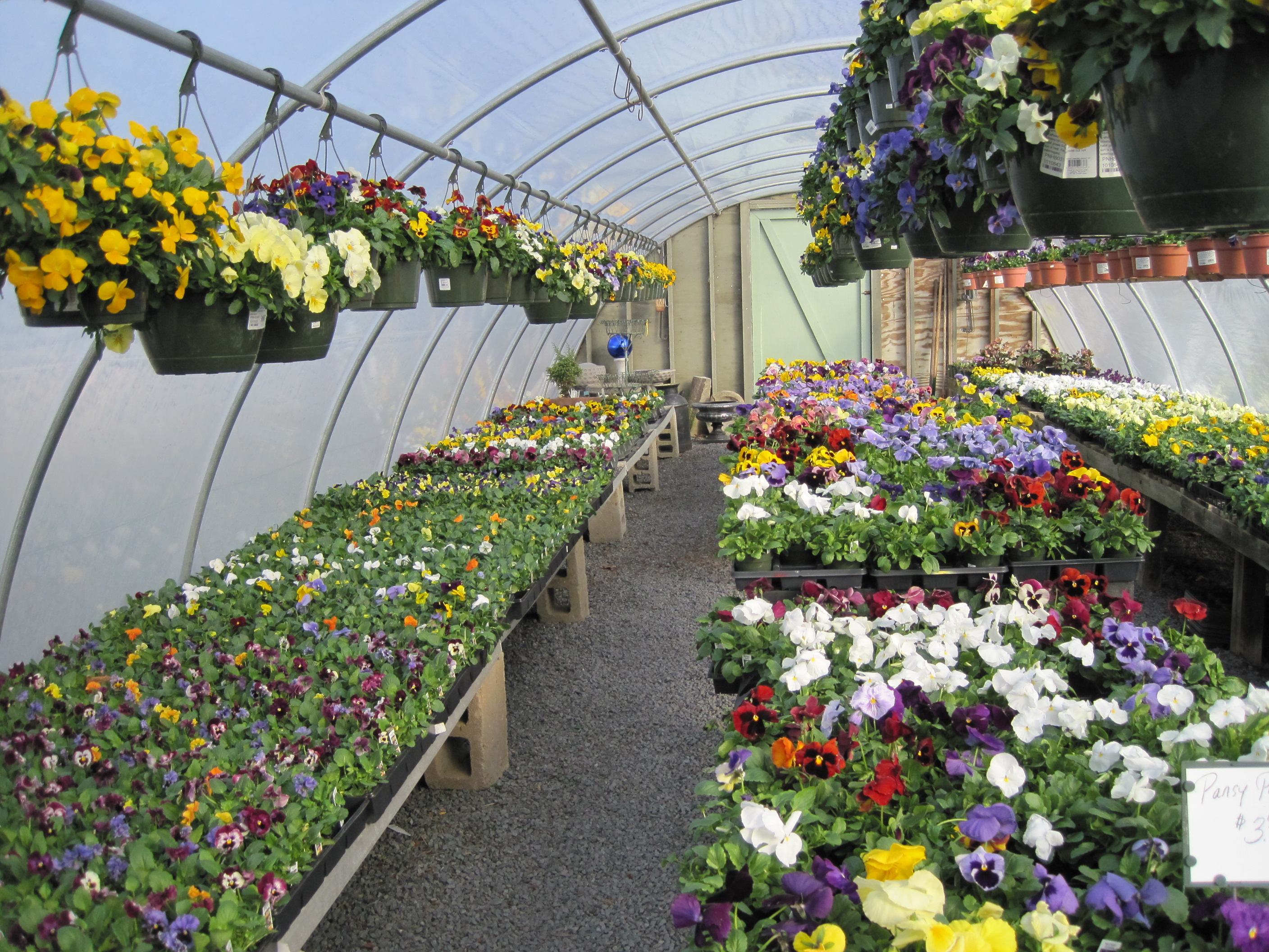 garden photo used peppers greenhouse such hobby for gardening private royalty stock growing small as image